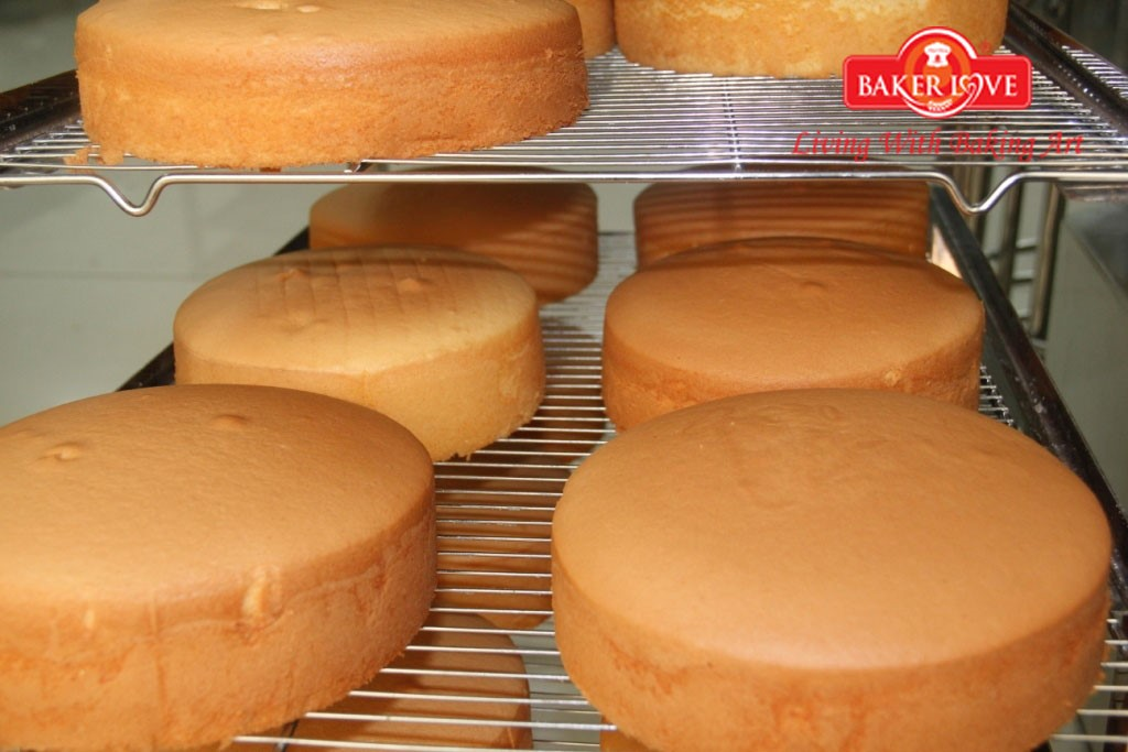 Dạy làm bánh bông lan bơ sữa – bông lan dạng ổ, phương pháp nguyên trứng (Buttermilk Sponge Cake)